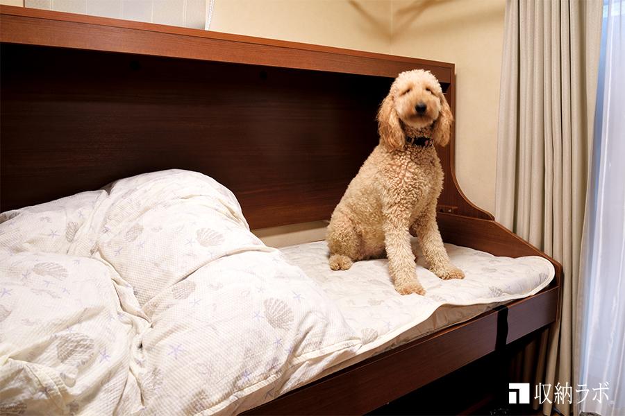 犬も使える収納ベッド