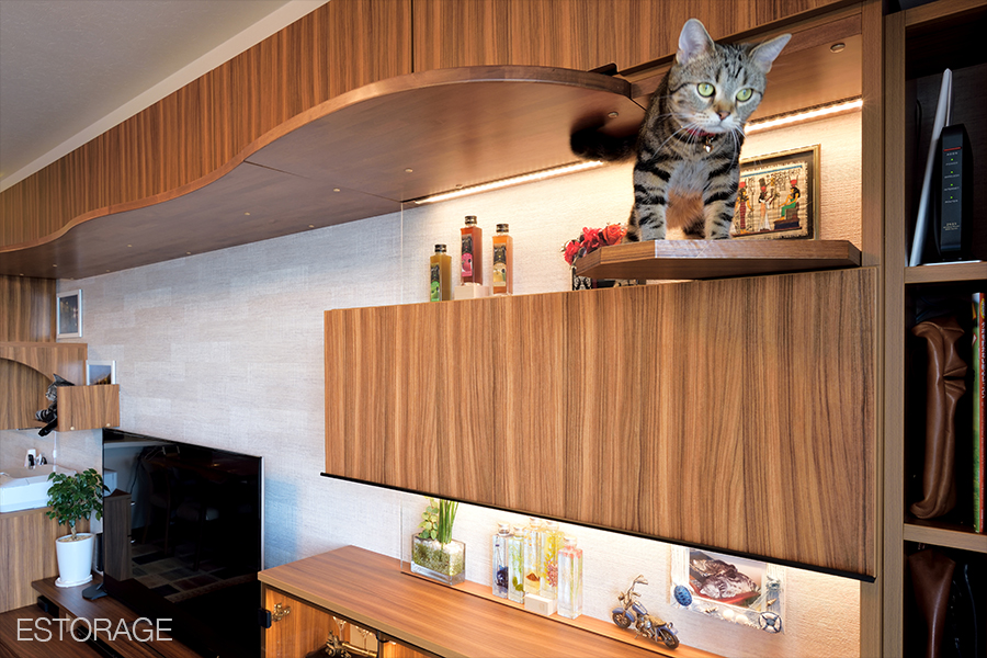 キャットウォーク付きリビング収納で遊ぶ猫