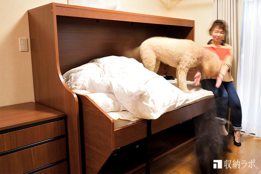 愛犬と一緒に寝るために欲しかった収納ベッド。