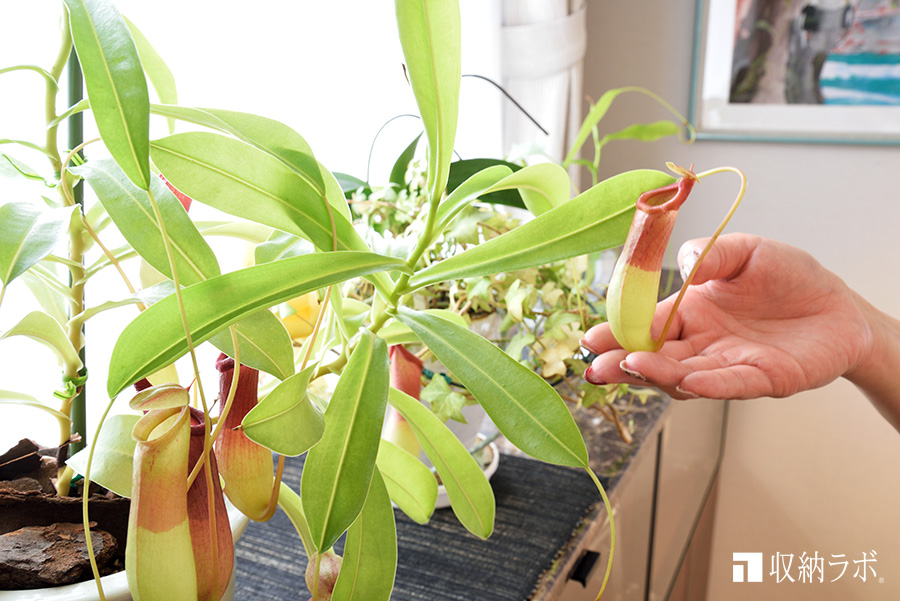 窓辺で育つ観葉植物