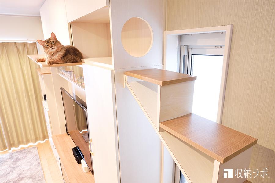 キャットウォーク付きの壁面収納でくつろぐ猫